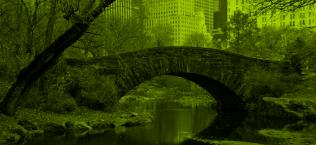 ASATCH árboles nueva york